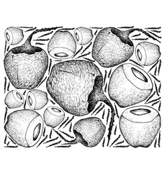 hand drawn background of fresh coconut fruits vector image
