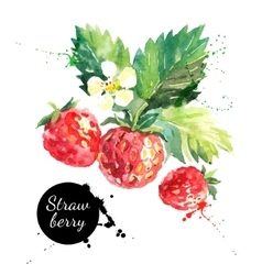 Hand drawn watercolor painting strawberry on white vector image