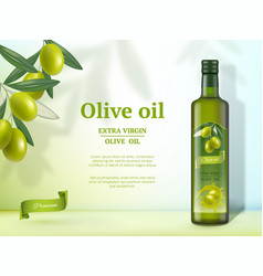 Olive ads oil for cooking food natural healthy vector