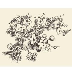 Sketch branch sakura flowers vector