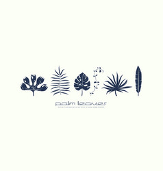 stock set of tropical plant leaves vector image
