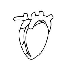 Heart human organ healthy line vector