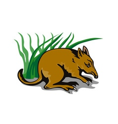 Bandicoot Bush Retro vector