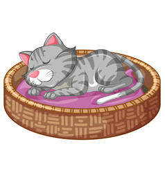 cute kitty in basket vector image