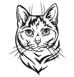 Decorative portrait mongrel cat vector