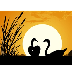 Swans at dawn vector image