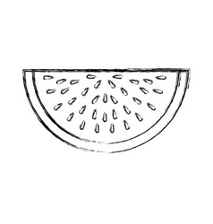 Watermelon tropical fruit icon vector