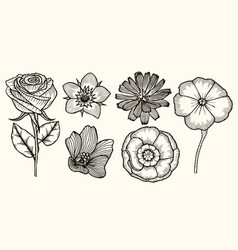 set vintage flowers vector image