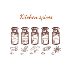 hand drawn kitchen spices set vector image vector image