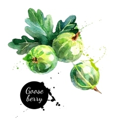 Hand drawn watercolor painting gooseberry on white vector image