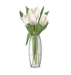 bouquet of white tulips in glass vase vector image