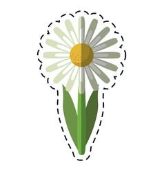 cartoon daisy floral garden spring vector image