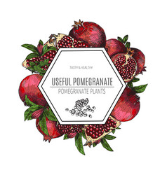 design of hand drawn pomegranate vintage vector image