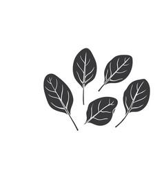 Spinach glyph icon vector