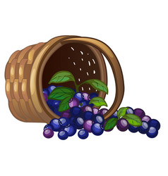 Wicker basket with spilled blueberries isolated on vector