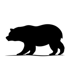 Bear design vector image