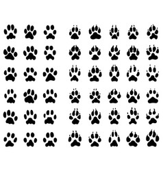 dogs and cats paws vector image