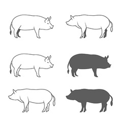 set pig isolated on white background vector image