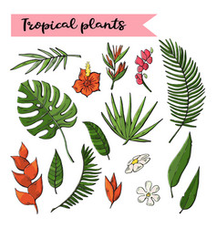 tropical plants setcollection isolated on a white vector image
