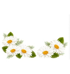 Nature background with white beautiful flowers vector image vector image