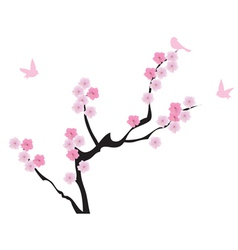 blooming cherry vector image vector image