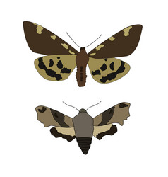 night moth on a white background vector image