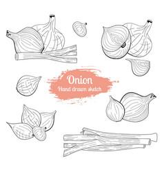onion hanf drawn sketch set food vector image