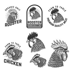 set rooster meat emblems design element vector image