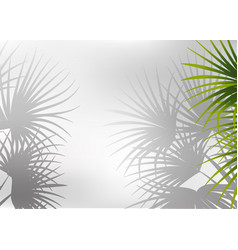 Shadow palm leaf background vector