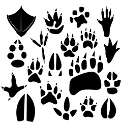 Traces of birds and animals vector image vector image