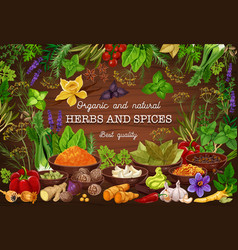 Spices culinary herbs cooking herbal seasonings vector
