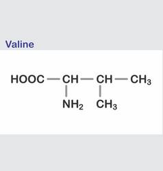 valine skeletal formula vector image