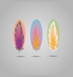 bright element set of colorful feathers vector image