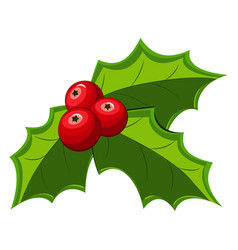 Christmas holly berry leaves vector