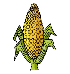 Ear of corn vector image