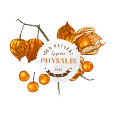 round emblem with hand drawn physalis vector image