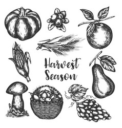harvest of vegetables hand drawn vector image