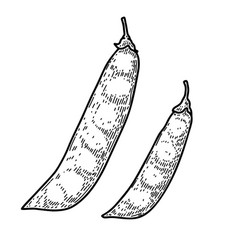 Pea pods in engraving style design element vector