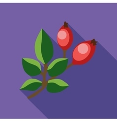 Rosehip branch with red berries icon flat style vector image