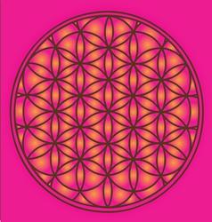 sacred geometry flower life symbol vector image