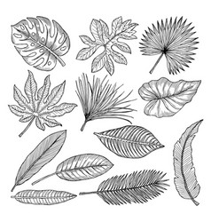 tropical leaves and plants hand drawing vector image vector image