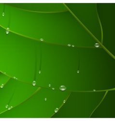 green leaf with drops vector image