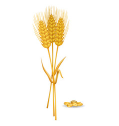 Wheat ears near grain pile isolated on white vector