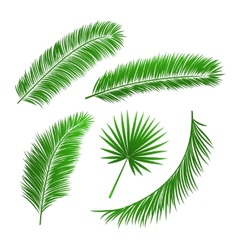 Collection of palm tree leaves vector image
