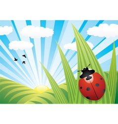 ladybird on the leaf vector image vector image