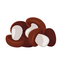 cartoon style of mushrooms vector image