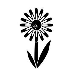 daisy floral garden spring pictogram vector image