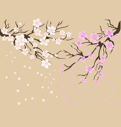 cherry blossoms background vector image vector image