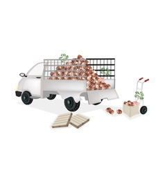 Hand Truck Loading Fresh Taro into Pickup Truck vector image