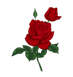 single red rose vector image
